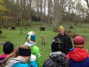 Vår guide Pelle berättar om manvargen som syns i bakgrunden.